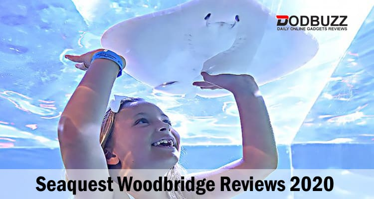 Seaquest Woodbridge Reviews 2020