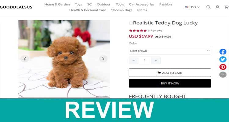 Realistic-Teddy-Dog-Lucky-R