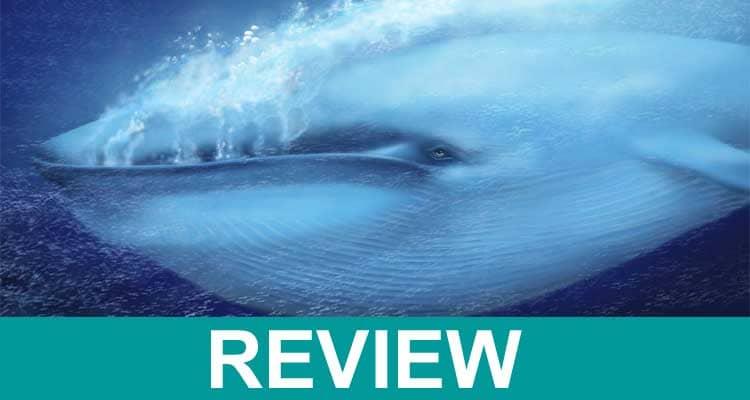 Blue Whale Bitten In Half 2021 .