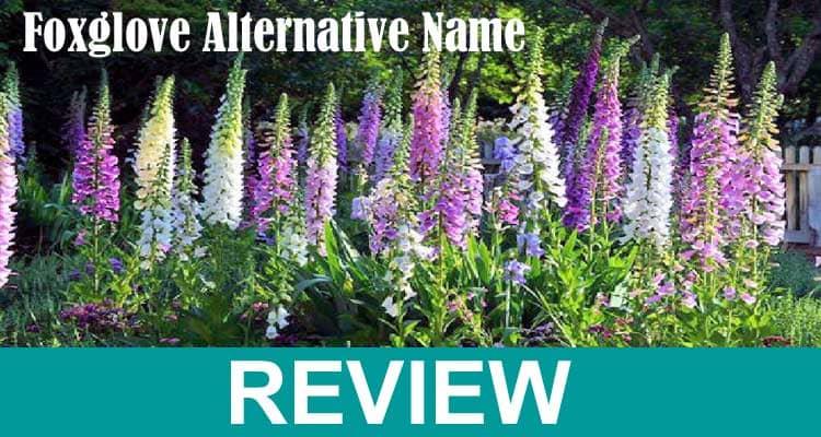 Foxglove Alternative Name 2021