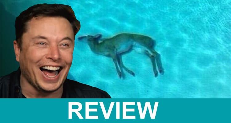 Elon Musk Dead Deer Meme 2021