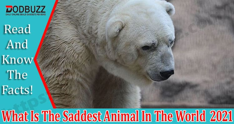 What Is The Saddest Animal In The World Dodbuzz.com