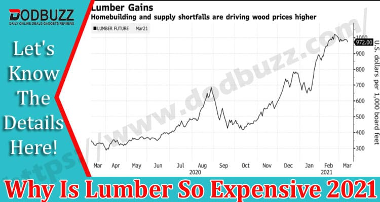 Why-Is-Lumber-So-Expensive- Dodbuzz.com