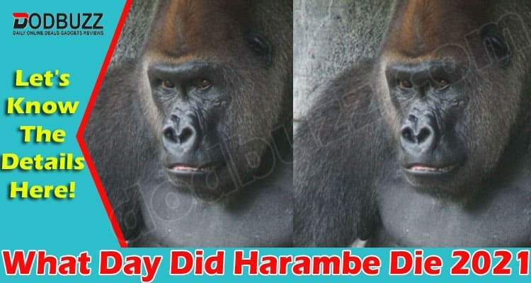 What Day Did Harambe Die (May 2021) Let Us Know Here!