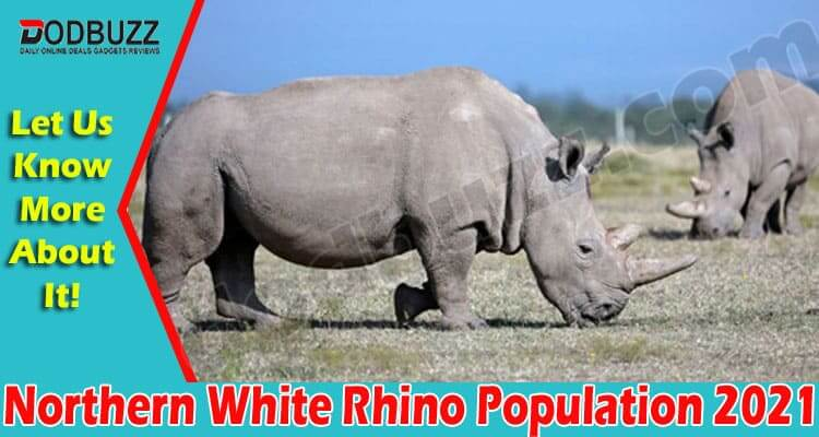 Northern White Rhino Population 2021 (June) ExtinctNot