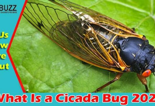 What Is a Cicada Bug {June 2021} Read Here To Know!