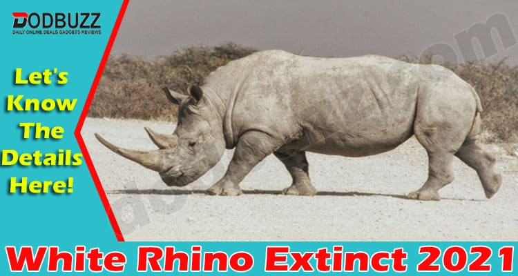 White Rhino Extinct 2021 (June) Find Out More Here!