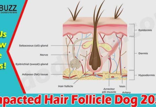 Impacted Hair Follicle Dog 2021