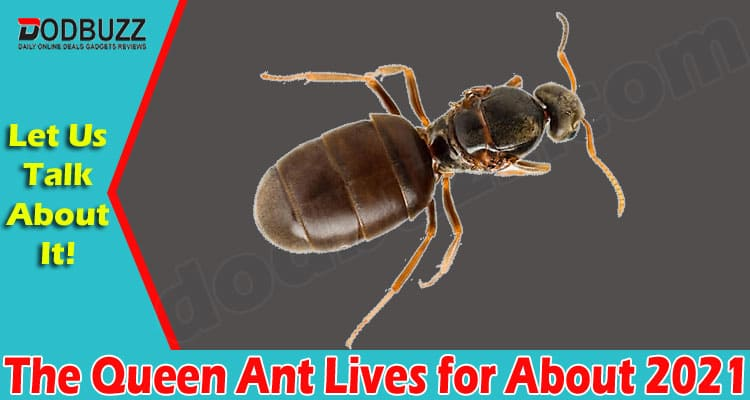 The Queen Ant Lives for About 2021