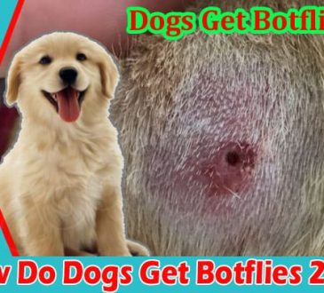Latest News Dogs Get Botflies